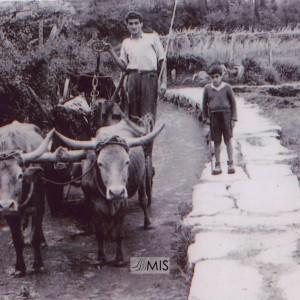 Laureano e Constante cun carro de bois en Budiño